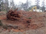 Land Clearing in Petrie