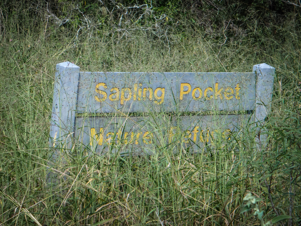 Sapling Pocket