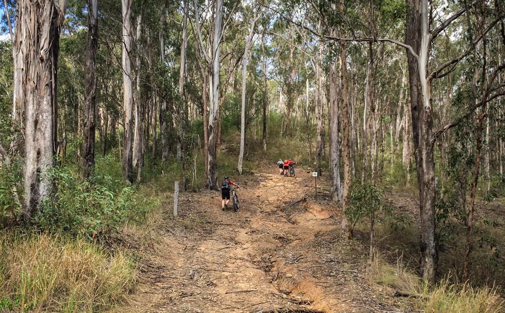 Mount Flinders
