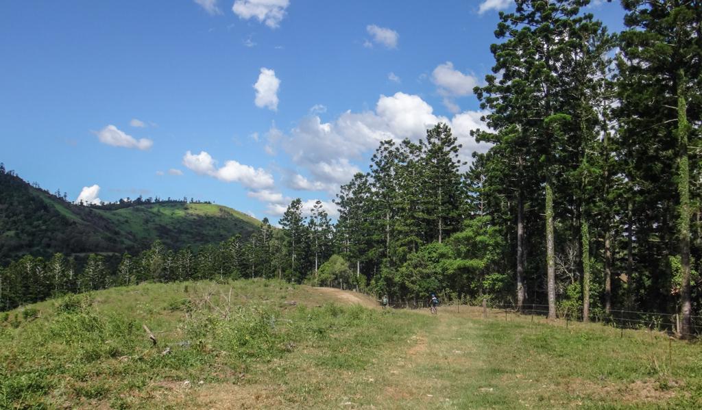 Hoop Pines