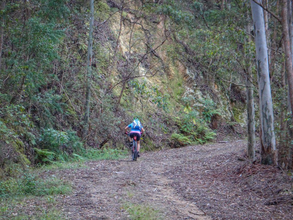 Laceys Creek Road