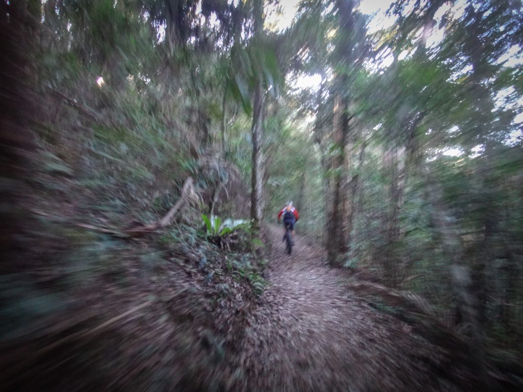 Rainforest, Mount Nebo