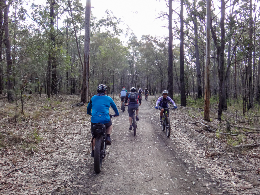 Mountain Bikers at Daisy Hill