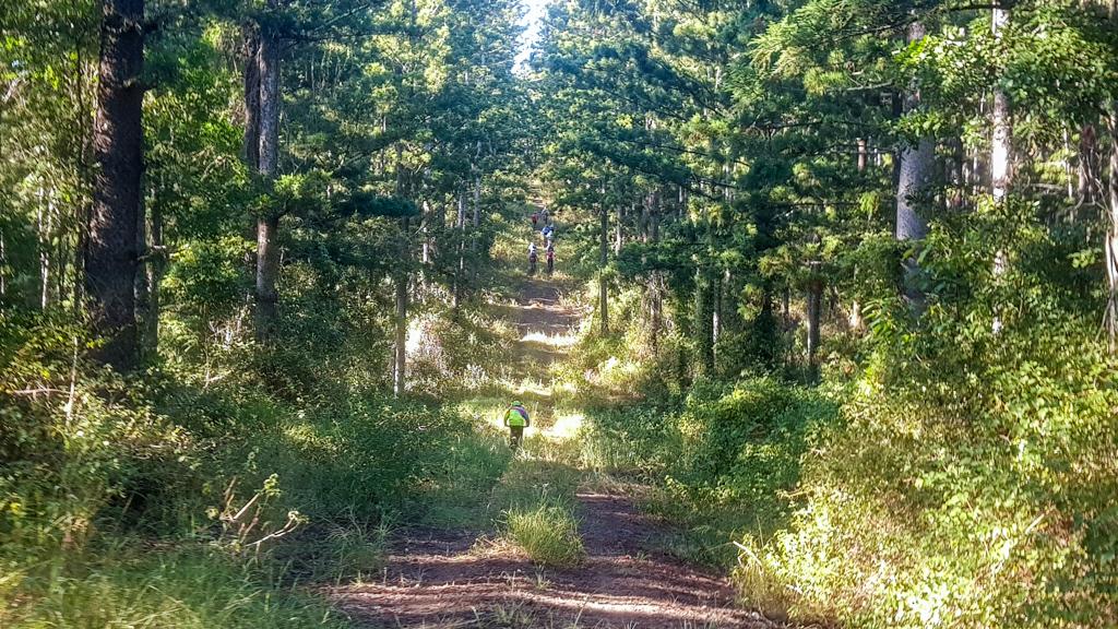Deer Reserve